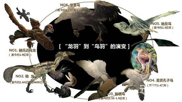 """翔""""龙""""飞""""羽""""的世纪旅行"""
