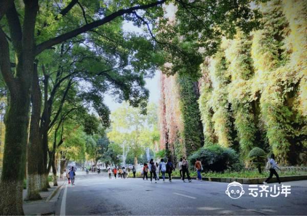 2019 yunqixuefudingxiang caida13
