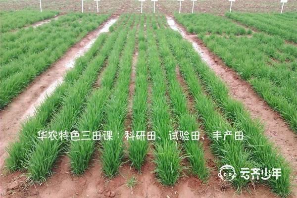 2019 yunqixuefudingxiang huanong13